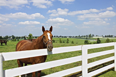 Kentucky horse farms